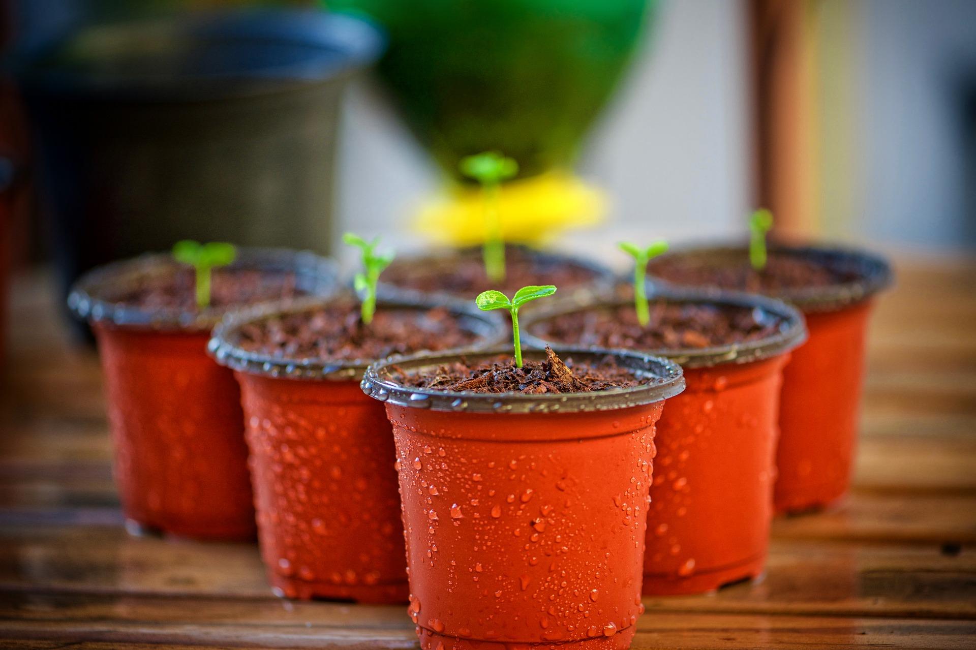 tipps zu pflanzgefäßen